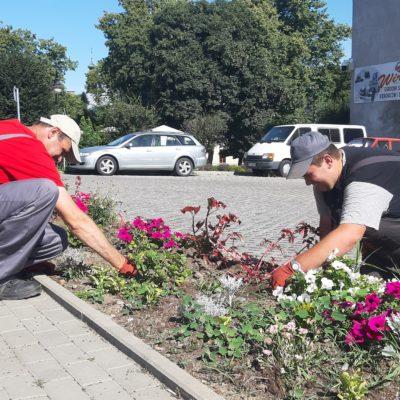 Osoby z NI sadzą kwiaty w Jarosławiu